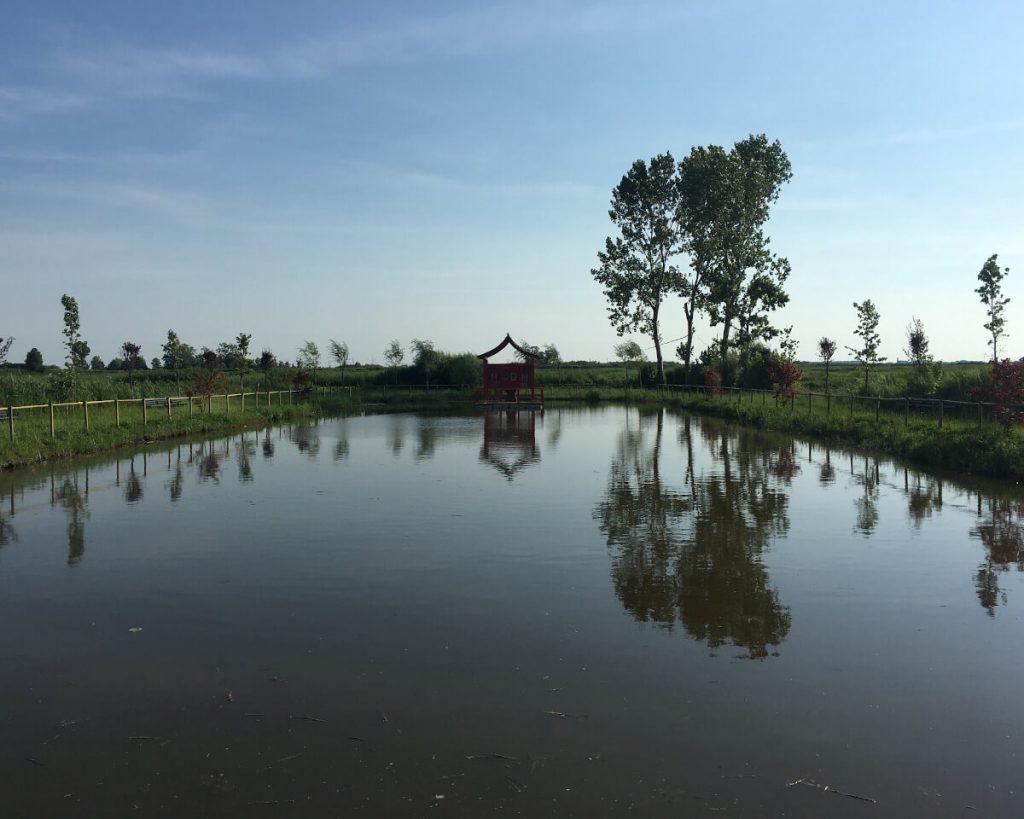 18 podere lovolio massarosa fondazione pomara scibetta la pagoda galleggiante