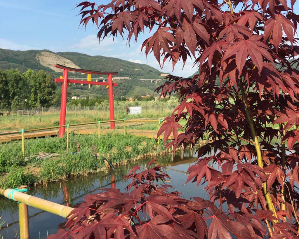 23 podere lovolio massarosa fondazione pomara scibetta l'arco di ingresso alla pagoda galleggiante